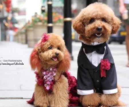 动物当家:开宠物婚纱摄影店赚大钱